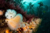 Shetland's Marine Life