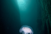 Jellyfish cave